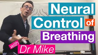 Neural Control of Breathing | Respiratory System