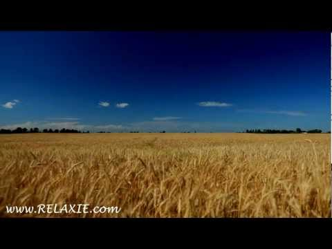 60minutes2relax - Golden Wheat Field