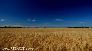 60minutes2relax - Golden Wheat Field
