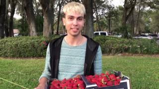 Нервным не смотреть Американские горки Клубничный фестиваль 2017 Fl Strawberry Festival Plant City