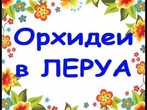 """ЛЕРУА:ОРХИДЕИ(онцидиумы,брассии),20.09.19,Самара,""""Космопорт"""".Приветы Ольге и Елене!"""