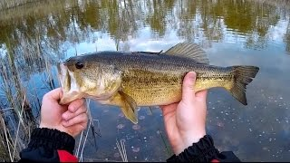 Big Bass, Tiny Pond! Lake Hopping Woodsy Fishing Adventure