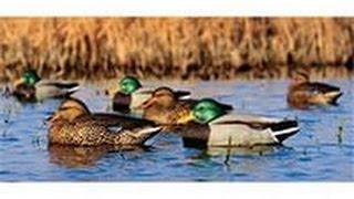 Смотреть онлайн Процесс весенней охоты на селезня