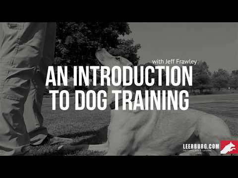 An Introduction to Dog Training I Self-Study Course - YouTube