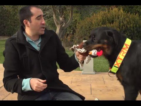 PERROS -  Peluches para los perros. ¿Cómo deben ser? Beneficios de los juguetes