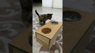 Cat Uses Special Feeder || ViralHog | Kholo.pk