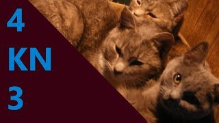 Cat Songs! The Cat with Two Heads by Aquabats
