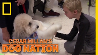 Paws with a Powerful Effect | Cesar Millan's Dog Nation