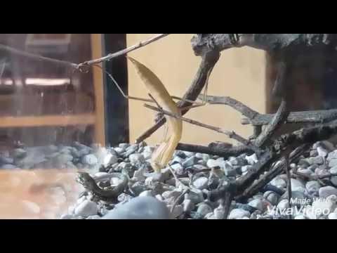 Come prevenire lapparizione di vermi