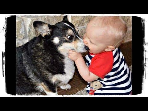 , title : 'Дети и Животные - Это Любовь | Kids and Animals - This is Love #518'