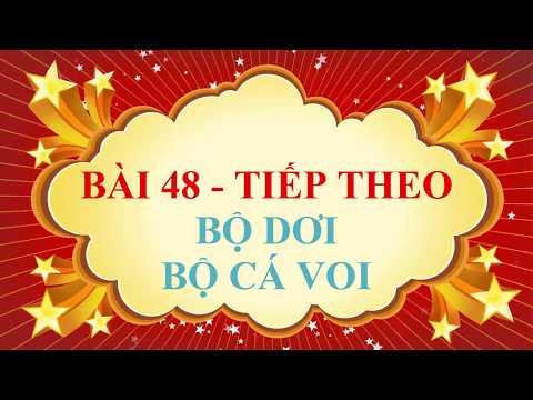 SINH 7-CHỦ ĐỀ: ĐA DẠNG CỦA LỚP THÚ ( TIẾT 2)- PHẦN B. BỘ DƠI, BỘ CÁ VOI ( video clip)