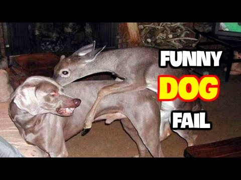 Best Funny Dog Fails July 2017 (Part 1) || Best Fails Compilation By FailADD
