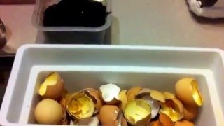How I fertilize my citrus trees.