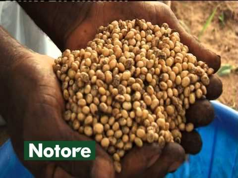 Soybean: An opportunity of USA-China trade war for Pakistan