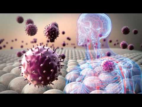 Video Kill Off and Delete Senile or Aging Cells with Quercetin