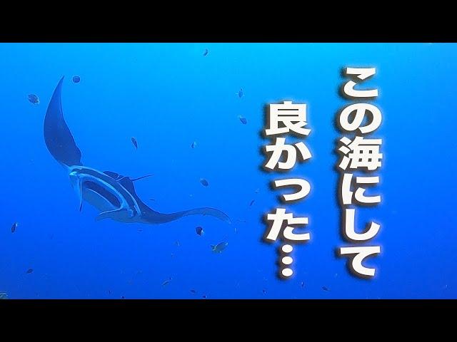 石垣島ダイビング|選択は間違いじゃなかった…|ビーチライフ石垣島