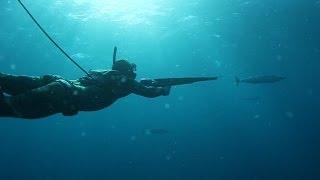 Sharks & Stripes- Spearfishing Wahoo