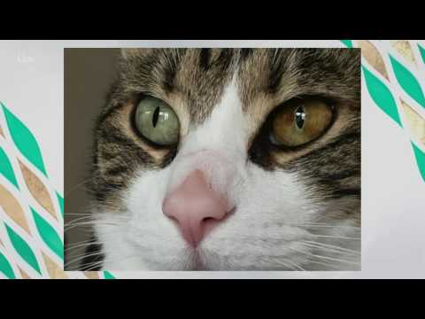 Why Are My Cat's Eyes Changing Colour? | This Morning