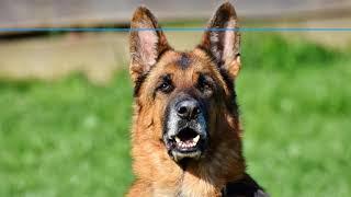 Die top 5 Alarmanlagen mit originalem Hundegebell im Vergleich