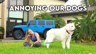 We tried to be as annoying as possible to our dogs..
