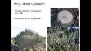 Llewellyn Jacobs - Feasibility of Eradication for Melaleuca parvistaminea in SA - May 2013