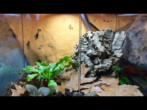 How To: Setup a Dart Frog Tank!!