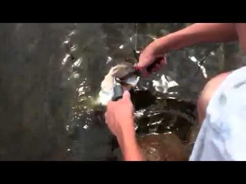 Bass Fishing Ponds Part 4/4