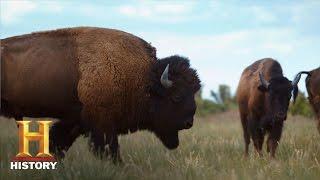 Ranchlands: Bison Season (Episode 4) | History