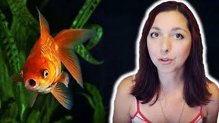 Goldfish Beginner Care Guide   Basic Care For Goldfish