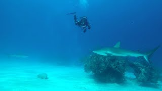 Surrounded By Sharks!! NO CAGE!!