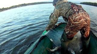 Как ловить кету на амуре без сетки