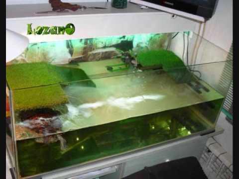 Ayuda que le pasa a mi tortuga japonesa yahoo for Acuario tortugas