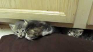 Fearsome Feral Kittens