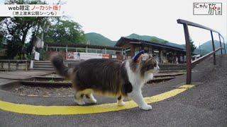 Vol.25「にゃん旅鉄道」電車はまだかにゃ~?