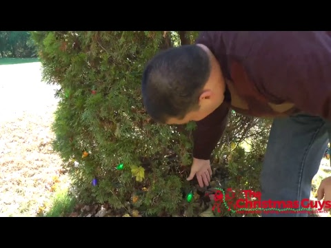 How to Decorate an Evergreen Tree or Bush – Professional Christmas Light Installation Tips