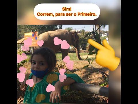 Dicas de Passeios Com Criana, Zoolgico de Sorocaba.