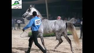 preview picture of video 'مزرعة رباب للخيول العربية الأصيلة. هاني خطاب للتصوير والليزر وتنظيم الحفلات  . 01116764659'