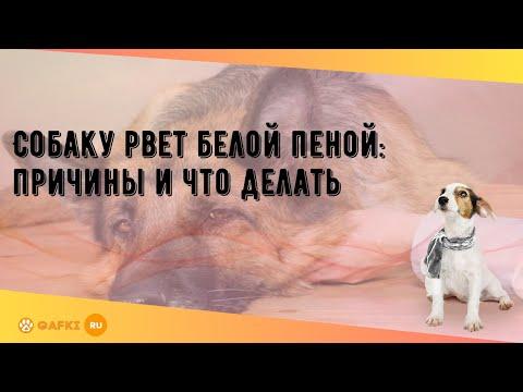 Собаку рвет белой пеной: причины и что делать