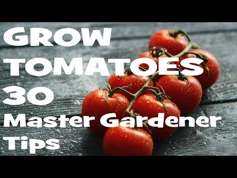 , title : 'How to Grow Tomatoes: 30 Master Gardener Tips