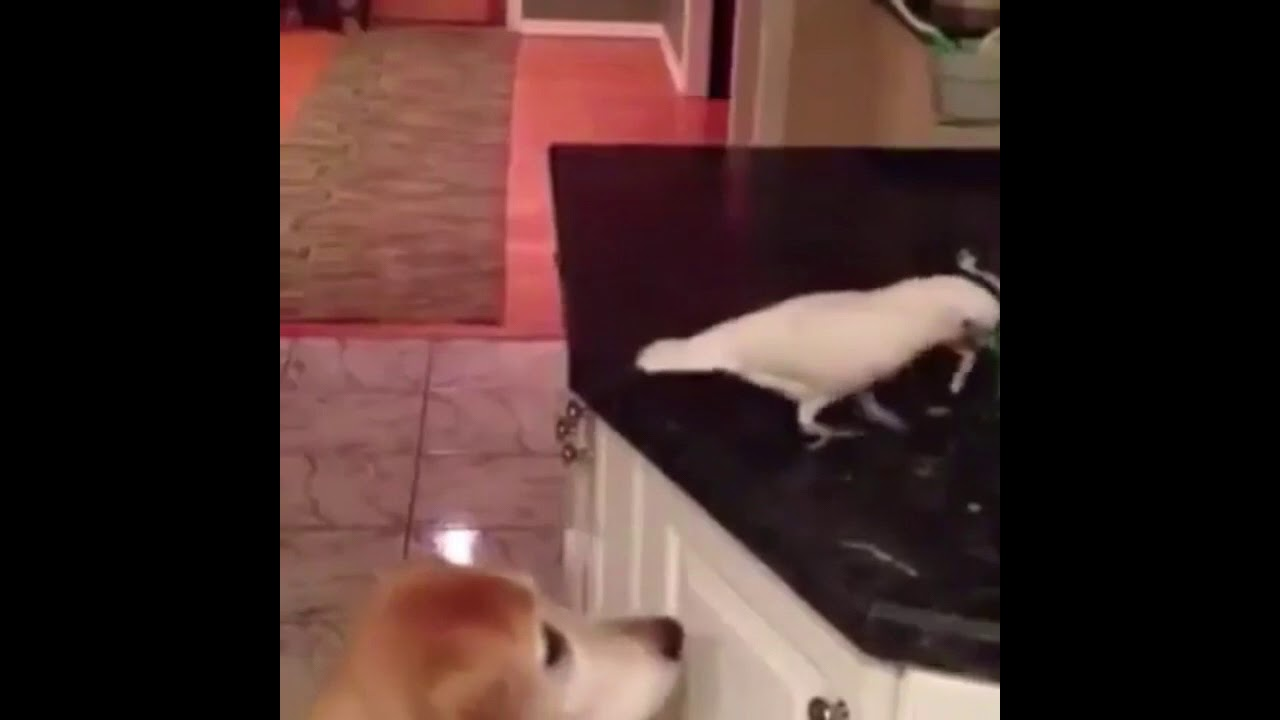 Попугай кормит собаку