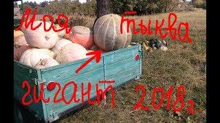Моя тыква-гигант этого года:)