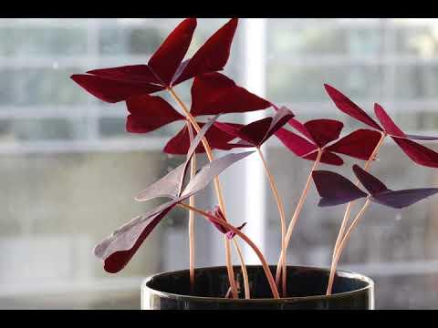 Πως κινούνται τα φυτά σε διάστημα 24 ωρών