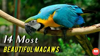 Top 14 Most Beautiful Macaws - VJ PET'S KPM