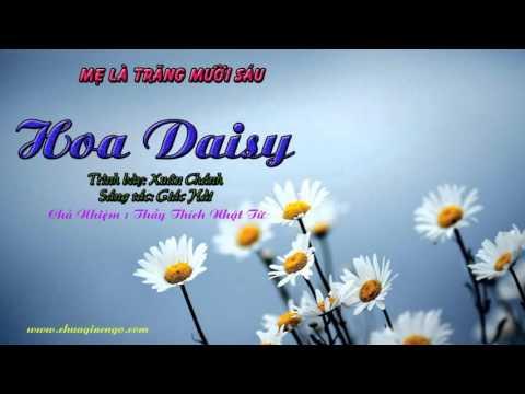 Hoa Daisy