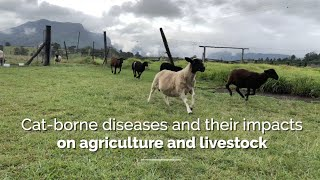 Cat-borne diseases and their impacts on agriculture and livestock in Australia