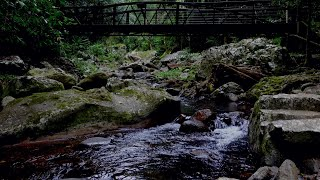 Calm RIVER Sounds & DARK SCREEN at 1 Hour | Water Sounds to Relax, Sleep, help insomnia, Study