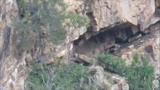 Elk Hunters Surprised By Bigfoot Thousand Peaks