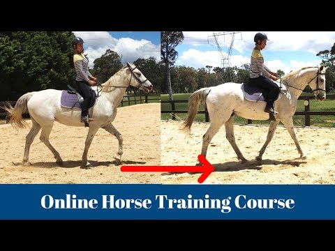 Online Horse Training Video Course - Train Your Horse at Home ...
