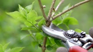 How to prune spring flowering shrubs | Grow at Home | Royal Horticultural Society