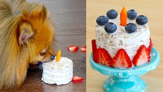 How To Make A Birthday Cake FOR DOGS | PADDINGTONS PANTRY | RECIPE
